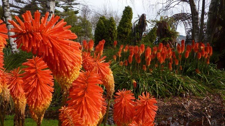 Flores dentro del Government Park de Rotorua, isla Norte de Nueva Zelanda