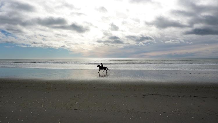 Caballo en playa de Nueva Zelanda