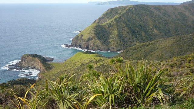 Vegetación en Cape Reinga, Nueva Zelanda