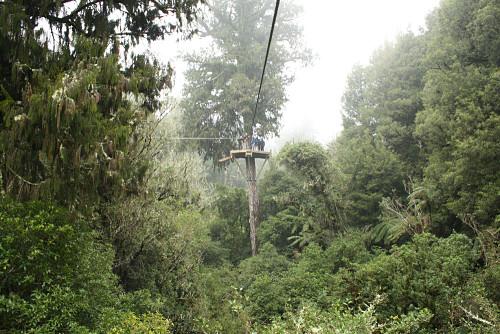 Este tour por los bosques de Rotorua es totalmente sostenible