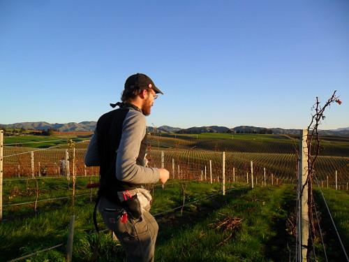 La agricultura está muy arraigada en Nueva Zelanda