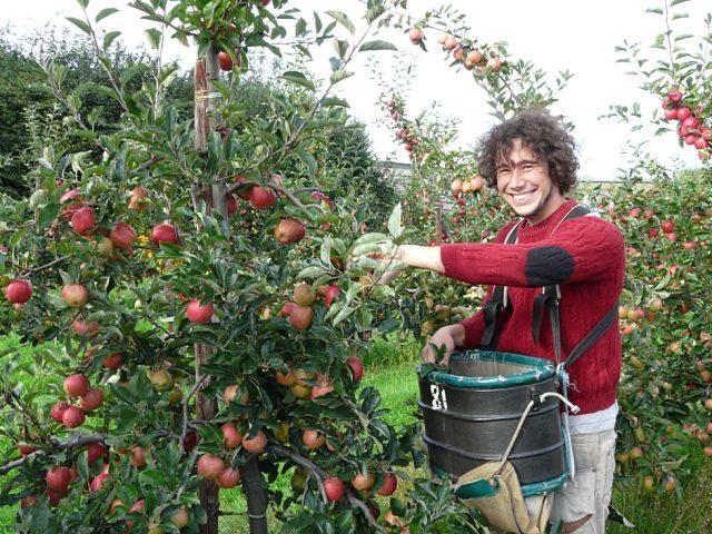 Página web donde buscar trabajo en la recogida de fruta en Nueva Zelanda